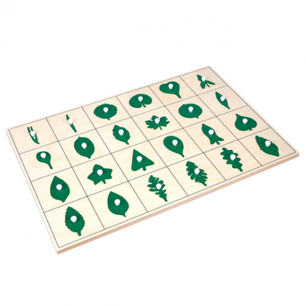 North American Botany Leaf Shapes Puzzle and Control Chart (Premium Quality)